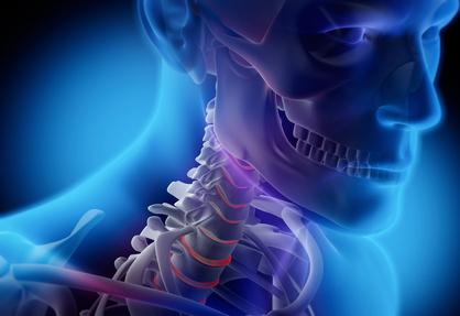 Anatomie-Closeup