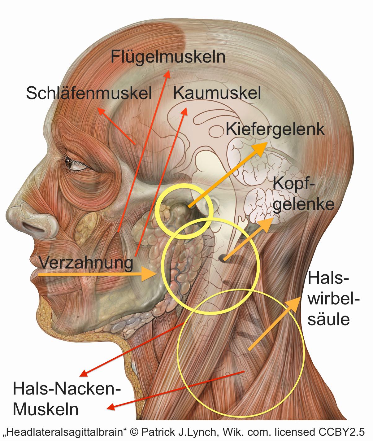 Großzügig Anatomie Der Hals Und Nacken Bilder Zeitgenössisch ...